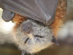 Headshot Flying Fox boat sleeping