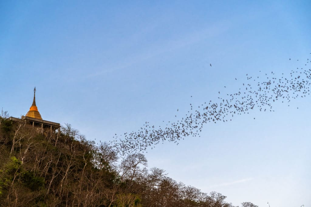 best places to see bats in the world